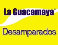 Guacamaya en Desamparados