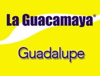 Guacamaya en Guadalupe