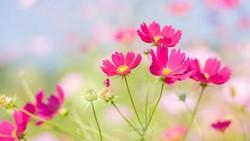 Foto de hermosas flores ornamentales
