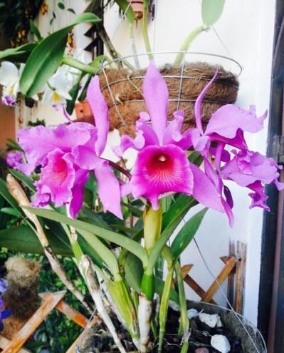 Foto de una orquídea de Vivero las Orquídeas
