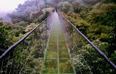 Picture of Monteverde bridge