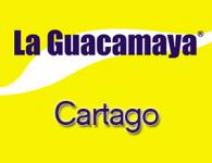 Guacamaya en Cartago