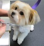 Corte de pelo de perros