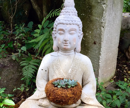 Picture of Buddha statue holding a small Kokedama with baby succulents