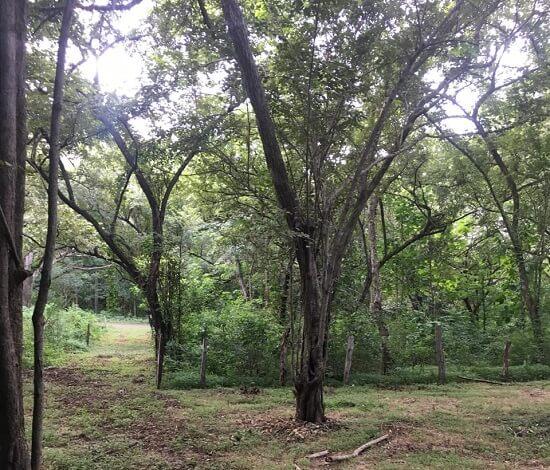 Picture of beautiful properties in Tamarindo