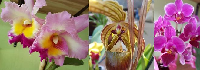 Foto de orquídeas de Costa Rica